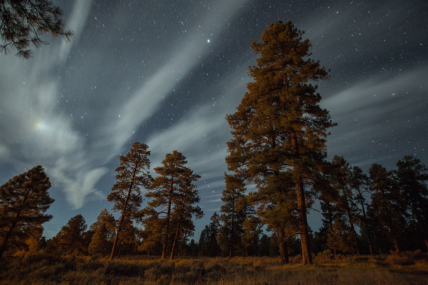 Night Forest near Grand Canyon, photo
