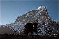 Yak and Cholatse